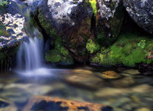 Flowing water in forest Royalty Free Stock Image