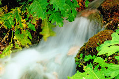 Flowing water. In the forest Stock Photo