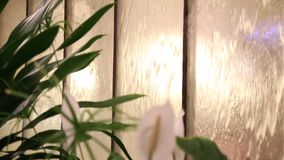 Flowing water on glass and flowers. Decorative glass with water flowing stock footage