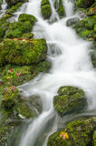 Flowing water and green moss Stock Photos