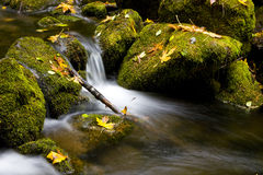Flowing Water Mountain Stream. Water Cascading over Green Moss covered Rocks with Fall maple Leaves Stock Photos
