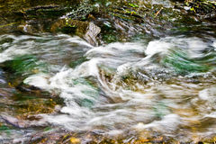 Flowing water, nice small creek Royalty Free Stock Photography