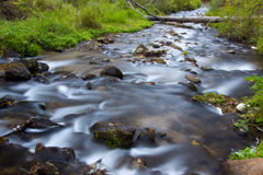 Flowing Water of Osceola Creek Royalty Free Stock Images