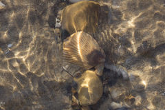 Flowing Water over Beach Shells Royalty Free Stock Photo