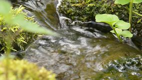 Flowing water and stones stock video