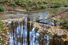 Flowing water in stream long shutter Dutch autumn forest Royalty Free Stock Image