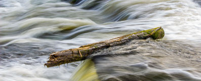 Flowing water. A stubborn moss covered log refuses to be budged by the fast flowing waters Stock Photo