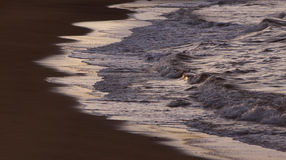 Flowing water  at sunset Royalty Free Stock Images