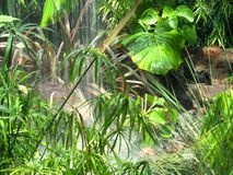 Free Flowing Water With Vegetation In Greenhouse Stock Image - 155463911