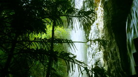 Flowing Waterfall Seen Through Tropical Plants. Beautiful Flowing Waterfall Seen Through the Branches and Leaves of Green Tropical Plants in the Jungle stock video