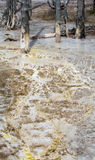 Flowing Yellow Mud with bare tree trunks Royalty Free Stock Image