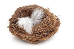 Flown the Nest Royalty Free Stock Photography