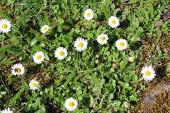 Flowwers de la primavera Fotografía de archivo