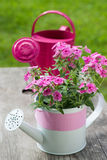 Flox cor-de-rosa Fotos de Stock