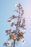 Flox da flor do dray da palha fotos de stock