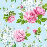 Flox flower seamless royalty free stock images