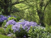 Floxträdgård royaltyfri fotografi