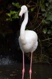 floyd ροζ Στοκ φωτογραφία με δικαίωμα ελεύθερης χρήσης