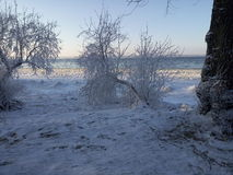 Flozen drzewo Obrazy Stock