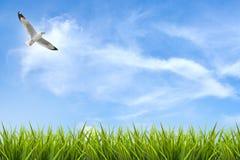 Fält av gräs under himmel och flygfågel Royaltyfri Fotografi