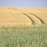 fält i sommar Fotografering för Bildbyråer
