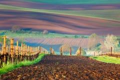 Fält och vingårdar, härligt bygdlandskap, vår Royaltyfri Fotografi