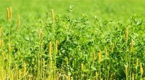 Fält ogräset Royaltyfria Bilder