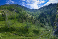 Flua em um vale da montanha, Sibéria, Altai foto de stock