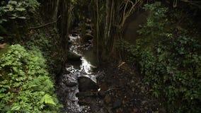 Flua na natureza e no santuário sagrado da floresta do macaco em Ubud vídeos de arquivo