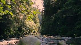 Flua o corredor através das rochas e dos pedregulhos ao longo da fuga de caminhada em Lynn Canyon Park, Vancôver norte, Columbia  video estoque
