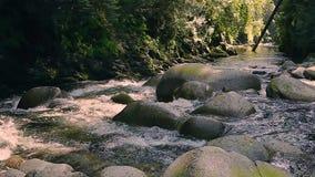 Flua o corredor através das rochas e dos pedregulhos ao longo da fuga de caminhada em Lynn Canyon Park, Vancôver norte, Columbia  vídeos de arquivo