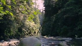 Flua o corredor através das rochas e dos pedregulhos ao longo da fuga de caminhada em Lynn Canyon Park, Vancôver norte, Columbia  filme