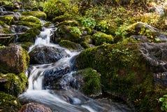 Flua o corredor através das rochas verdes musgosos na região selvagem de Utá imagens de stock royalty free