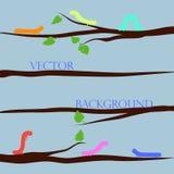 Fluage multicolore de chenilles Chenilles drôles sur des branches, vecteur illustration stock