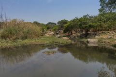 Fluent river with rocks and vegetation in Africa. Lubango. Angol. A Royalty Free Stock Photo