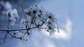 Fluff congelado Imagem de Stock