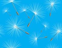 Fluff of dandelion on the blue background. Illustration Royalty Free Stock Images