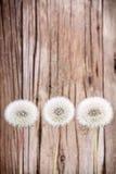 Fluff de Danelion no fundo de madeira fotos de stock