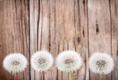Fluff de Danelion no fundo de madeira fotografia de stock royalty free