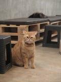 Fluff do gato fotos de stock royalty free