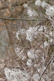 Fluff. Nice spring fluff shrub detail Stock Photography