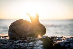 Fluffig angora- kanin Arkivfoton