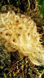 fluffig blomma Arkivfoton