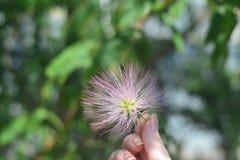 fluffig blomma Royaltyfri Fotografi