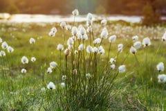 Fluffig blommabakgrund royaltyfria foton