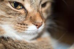 Fluffig grå härlig kattunge Royaltyfri Fotografi