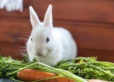 fluffig kaninwhite Royaltyfri Bild