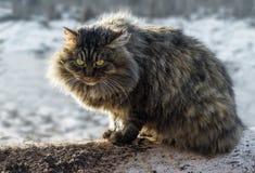 fluffig katt Arkivbild