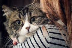 fluffig katt royaltyfria foton