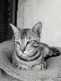 fluffig katt Arkivfoton